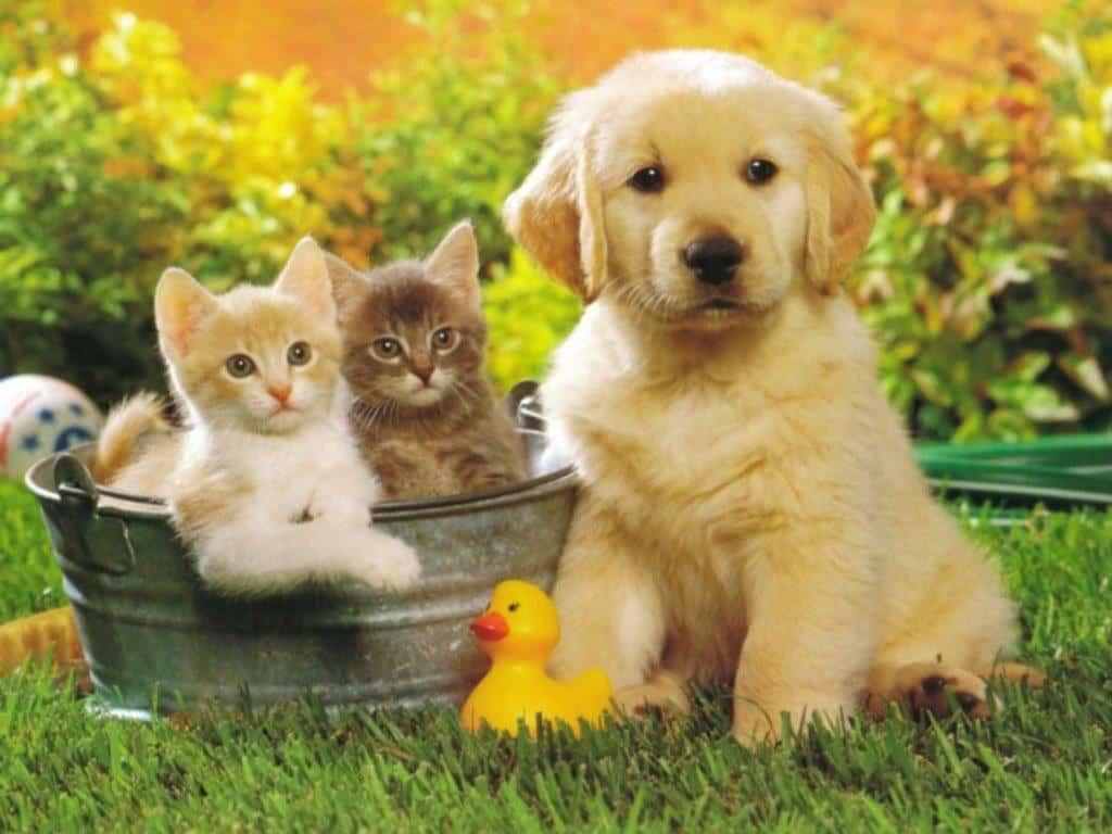 Quà tặng tân gia không nên tặng thú nuôi