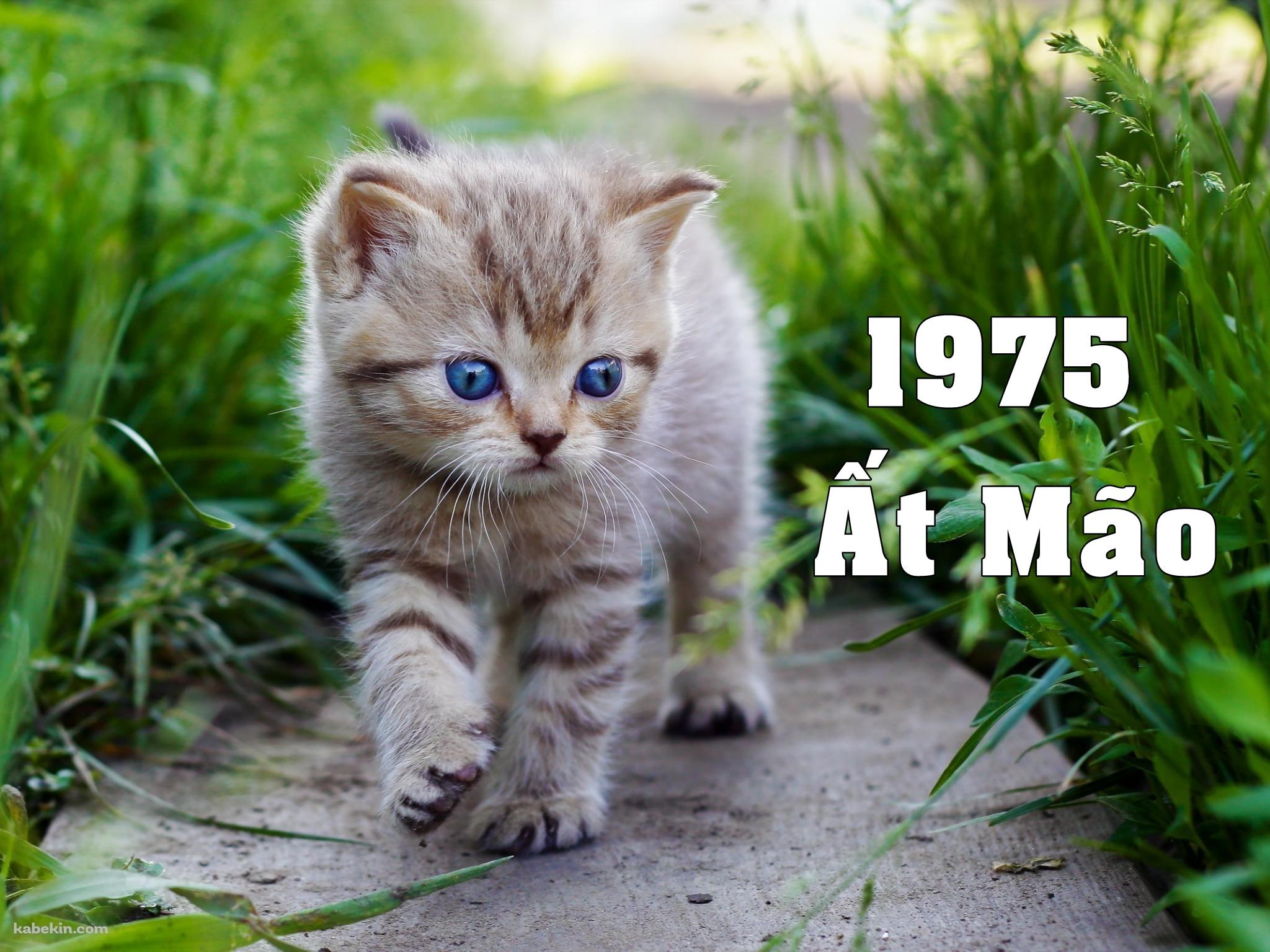 Sinh năm 1975 Ất Mão thuộc mệnh gì?