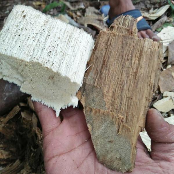 Trầm hương indonesia