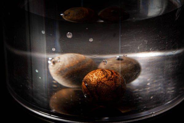 Trầm hương chìm nước nặng hơn trầm nổi nên sẽ bị đẩy xuống dưới